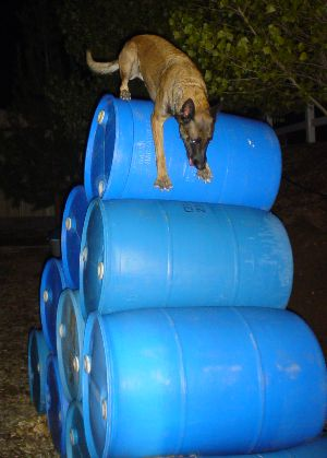 Cali climbing the barrel mountain