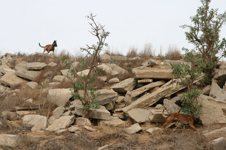 Cali and Nexxus hunting in the rubble pile for those rascally rabbits