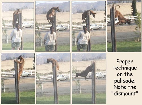 Palisade Jump Trajectory Dantero Malinois