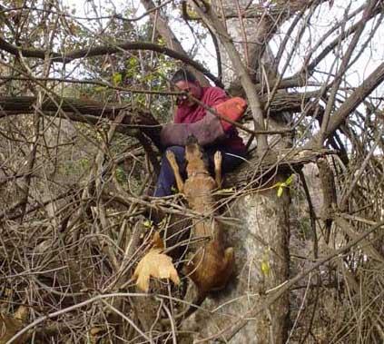 Cali having fun in a tree