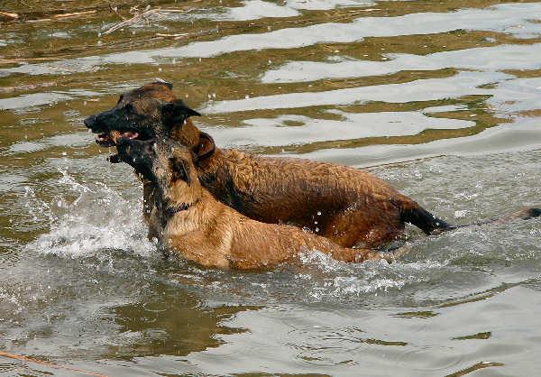 Learning to swim (Nexxus)
