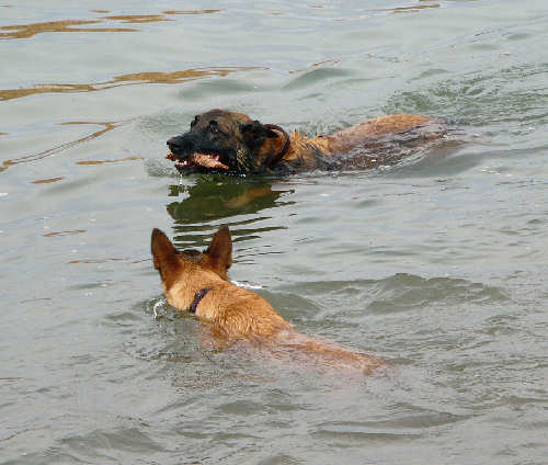 Nexxus at the river learning to swim with Cali