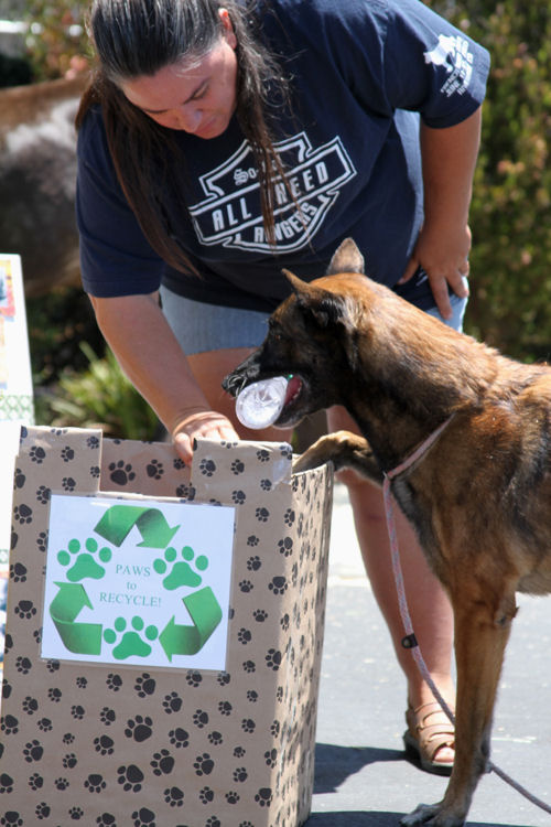 Cali - Orange County Animal Control pet fair, the recycling dog (her booth won first place :-) )